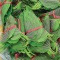 韓国エゴマの葉 約500枚 (市価基準)